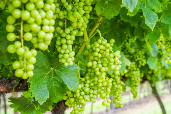 A VITAS Portugal adquire a FALUA, propriedade vitivinícola da região do Tejo