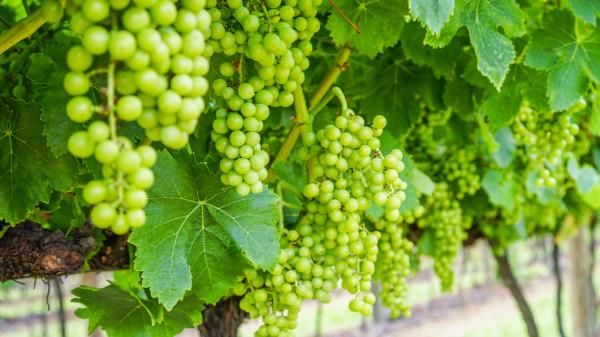 VITAS Portugal acquiert Falua, domaine viticole de la region du Tejo