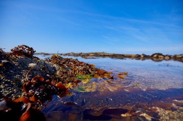 Journée Mondiale de la mer: les algues, une solution d'avenir?