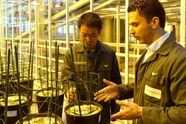 Rice farming from Beijing to Saint-Malo – Questions for Bin Wang